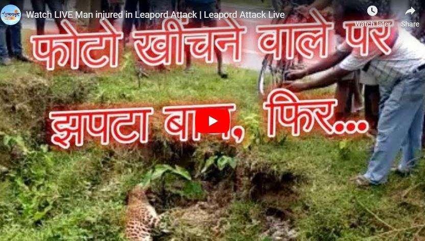 बाघ से कभी पंगा मत लेना, वर्ना होगा ये हश्र, देखिए बाघ के अटैक का LIVE VIDEO