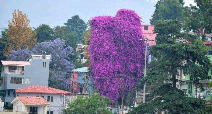अल्मोड़ा | 200 साल का साथ और एक रात की बारिश का सितम, अब सिर्फ यादें बाकी…