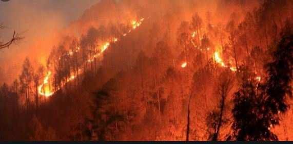 उत्तराखंड | 24 घंटे में 62 हेक्टेयर जंगलराख, मौसम विभाग ने दी राहत भरी खबर